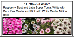 "• ""Blast of White"", a mix of Raspberry Blast and Latte Super Tunia, White with Dark Pink Center and Pink with White Center Million Bells."
