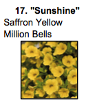 """Sunshine"" Saffron Yellow Million Bells."