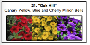 """Oak Hill"", a mix of Canary Yellow, Blue and Cherry Million Bells."