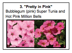 """Pretty in Pink"", a mix of Bubblegum (pink) Super Tunia and Hot Pink Million Bells"