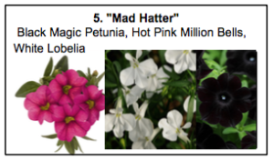 """Mad Hatter"", a mix of Black Magic Petunia, Hot Pink Million Bells, White Lobelia"