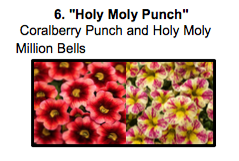 """Holy Moly Punch"", a mix of Coralberry Punch and Holy Moly Million Bells"