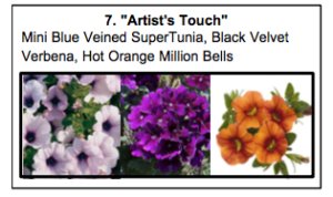 """Artist's Touch"", a mix of Mini Blue Veined SuperTunia, Black Velvet Verbena, Hot Orange Million Bells."